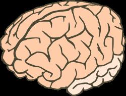 Gehirn 2colors cliparts, clipart.