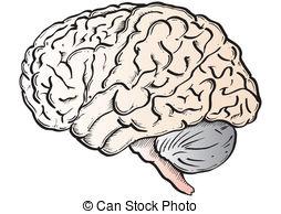 Gehirn clipart 4 » Clipart Station.