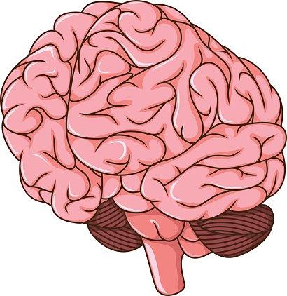 menschliche Gehirn Klumpen cartoon Clipart Image.