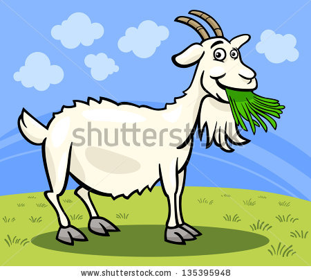 Goat Beard Stock Photos, Royalty.