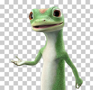 36 Geico PNG cliparts for free download.