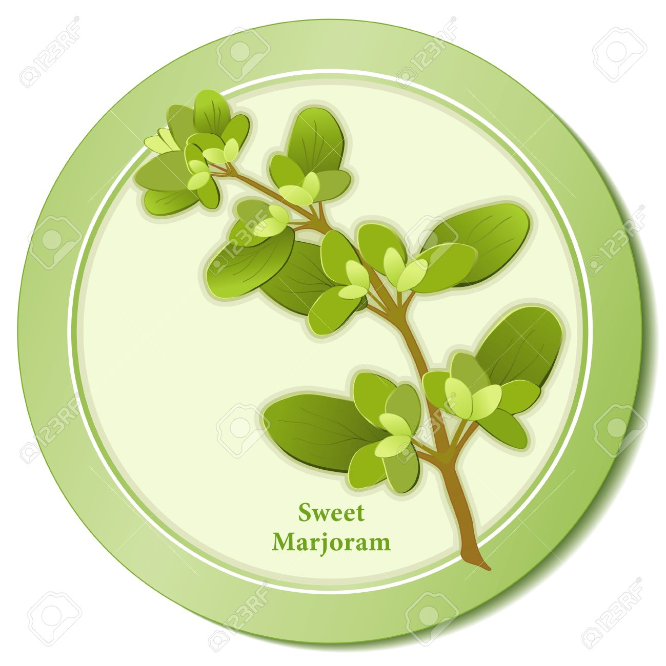 Sweet Marjoram Herb Icon Royalty Free Cliparts, Vectors, And Stock.