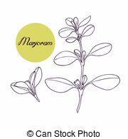 Marjoram Vector Clipart EPS Images. 219 Marjoram clip art vector.