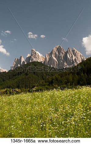 Stock Photography of Wildflowers with mountain range on a.