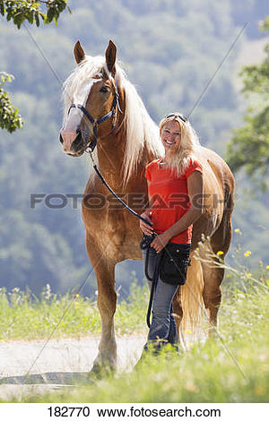 Stock Photography of Noriker Horse. Smiling woman standing next to.