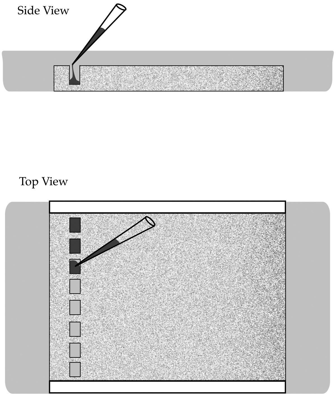 Gel Electrophoresis Kit.