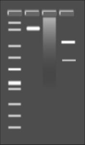 Agarose Gel medium 600pixel clipart, vector clip art.