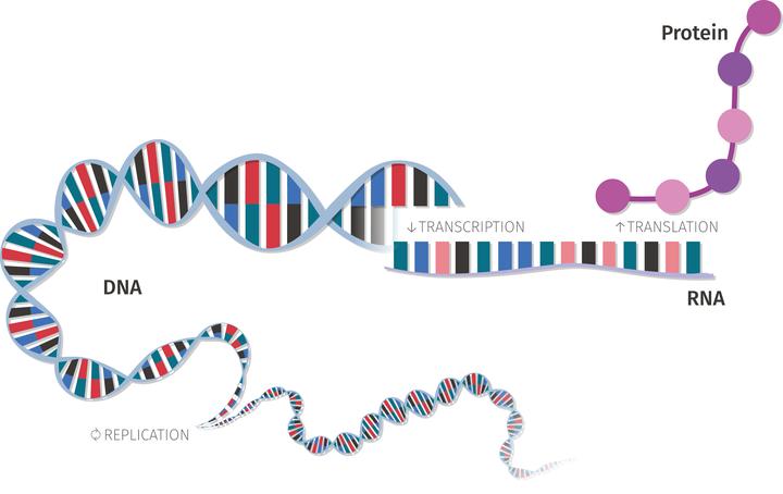 Relationship between genetic concepts.