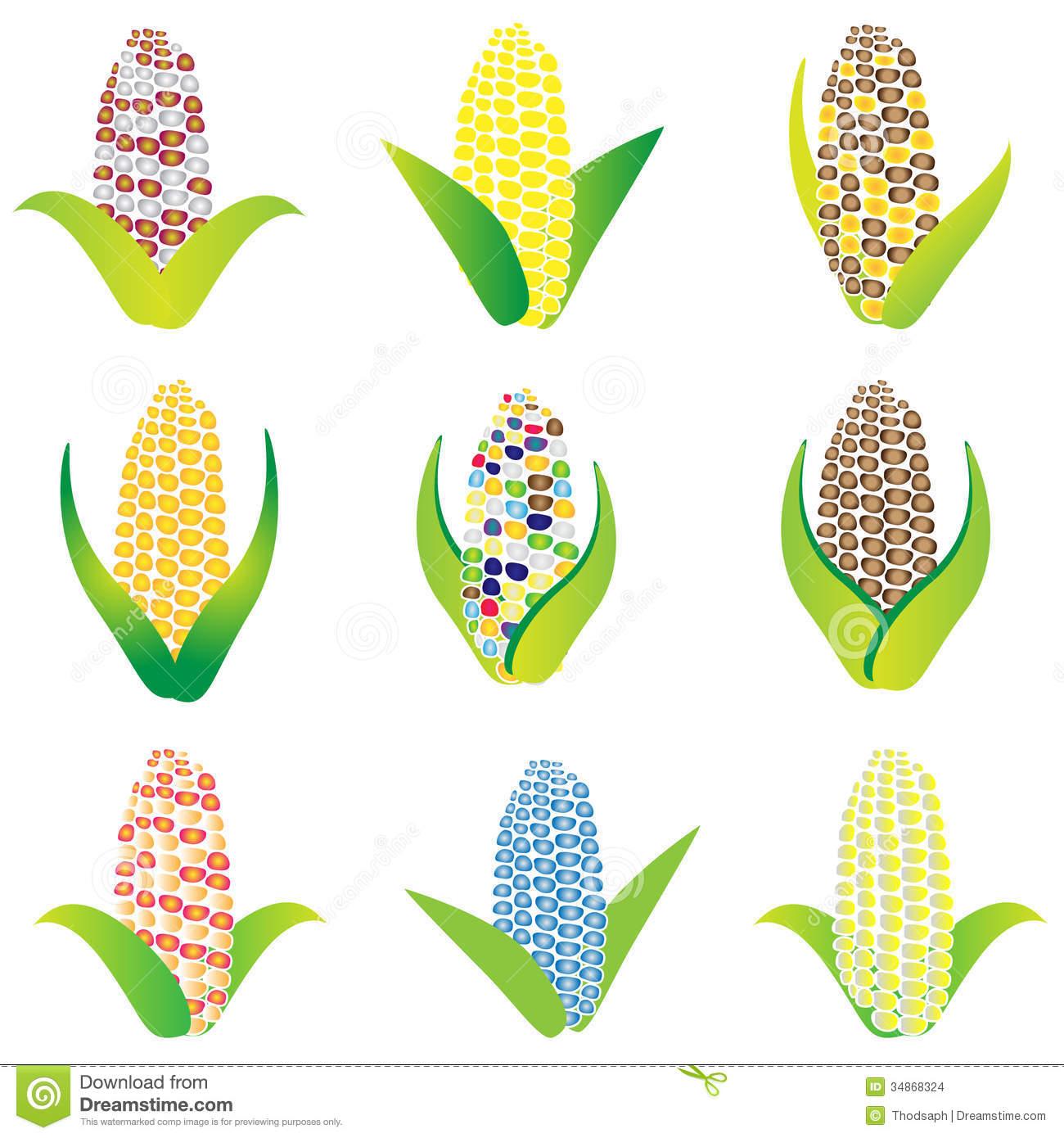 Gmo Corn Stock Illustrations.