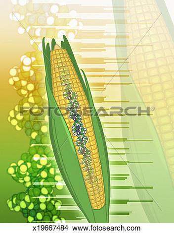 Drawings of Genetically Modified Corn x19667484.