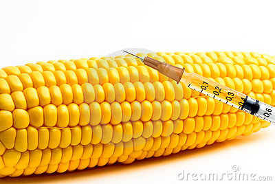 Genetically Modified Maize Stock Vector.