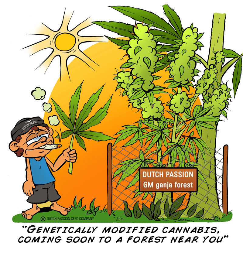 Genetically engineered cannabis..