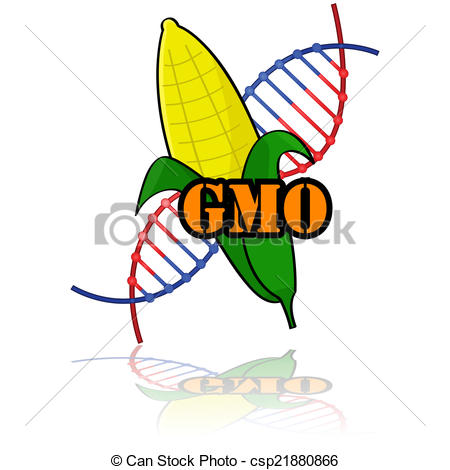 Clip Art Vector of Genetically modified corn.