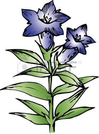 62 Gentian Stock Illustrations, Cliparts And Royalty Free Gentian.