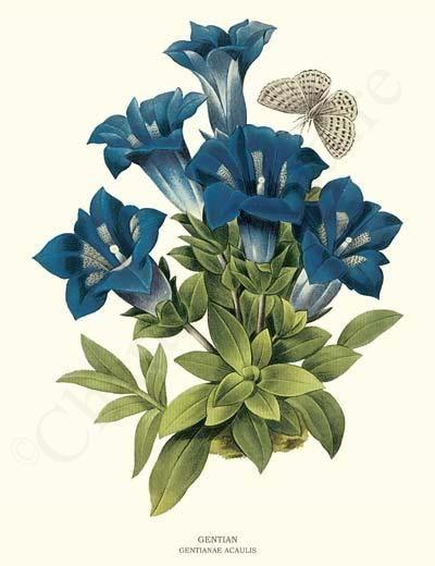 Vintage Flower Art Botanical Prints.