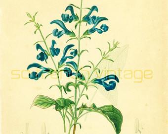 Botany.