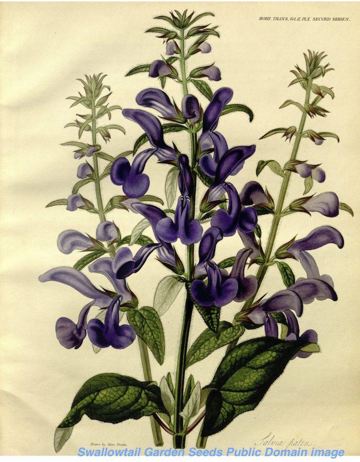 1000+ images about Sarah Ann Drake Botanical illustrations on.