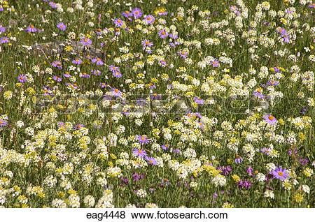 Gentian shrub clipart #13