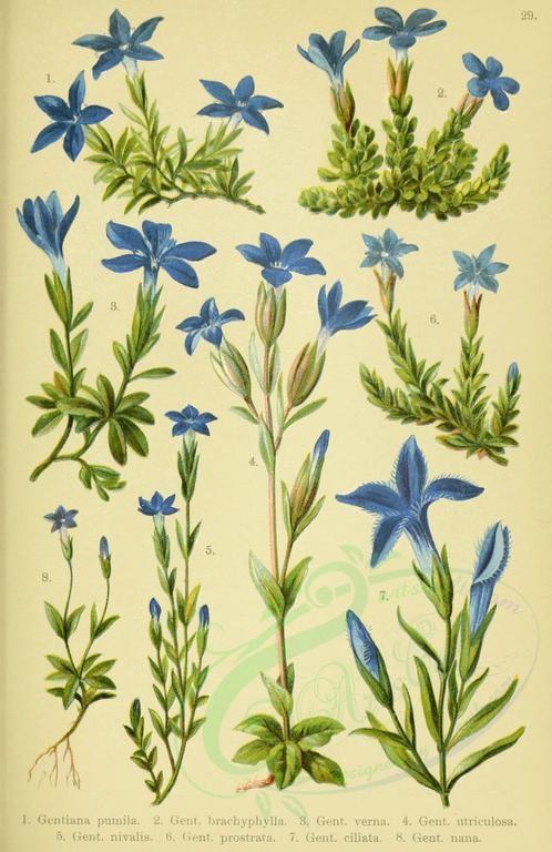 blue_flowers.