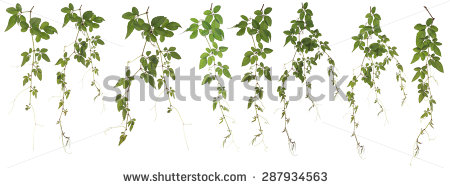 Angiosperma Stock Photos, Images, & Pictures.
