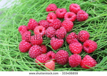 """rubus Rosaceae"" Stock Photos, Royalty."