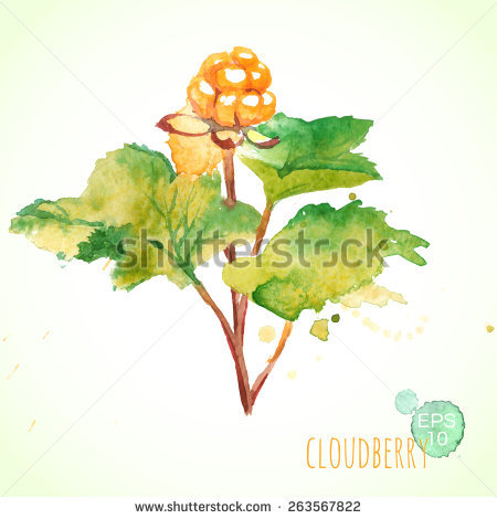 Rubus Stock Photos, Royalty.