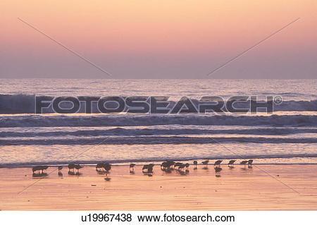 Pictures of sunrise, sunset, Cumberland Island, Georgia, ocean.