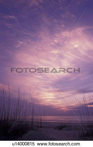 Stock Image of Cumberland Island National Seashore, GA, Golden.