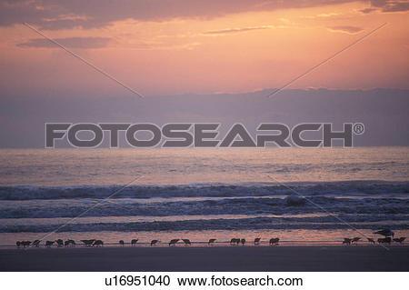 Stock Photography of sunrise, sunset, Cumberland Island, Georgia.