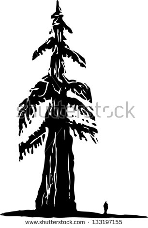 Redwood Tree Stock Photos, Royalty.