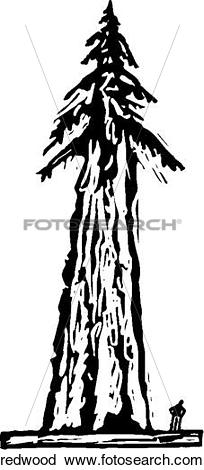 Clipart of Redwood redwood.