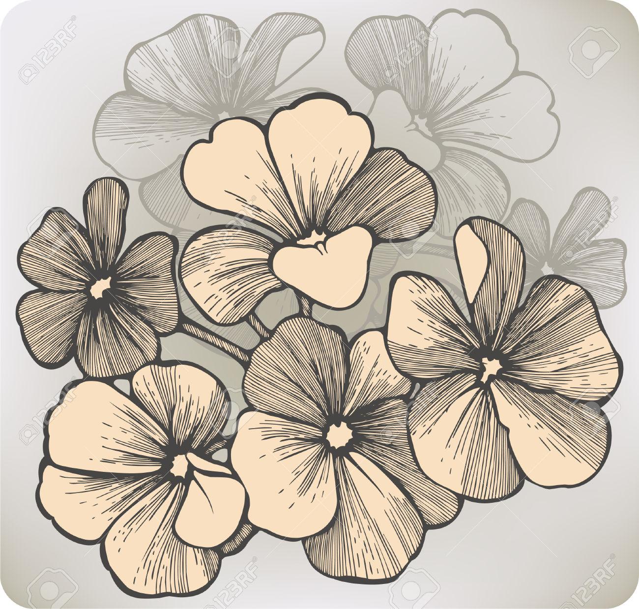 Fiore Di Geranio, Disegno A Mano. Illustrazione Vettoriale.