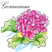 Geranium Clip Art and Illustration. 229 geranium clipart vector.