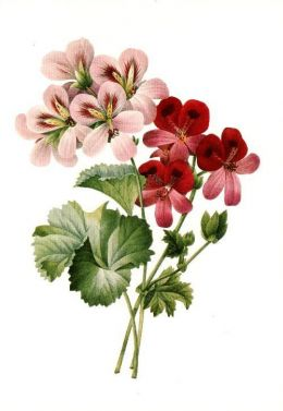 Free Vintage Flowers and Seed Packets Images.