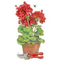 Geranium clipart 20 free Cliparts | Download images on ...