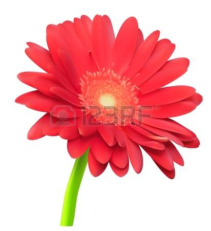1,603 Gerber Daisy Cliparts, Stock Vector And Royalty Free Gerber.