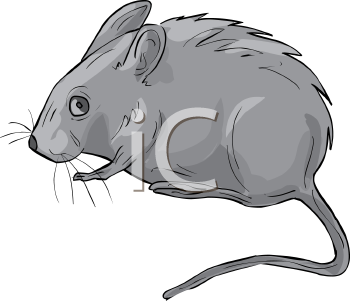 Gerbil or Mouse.
