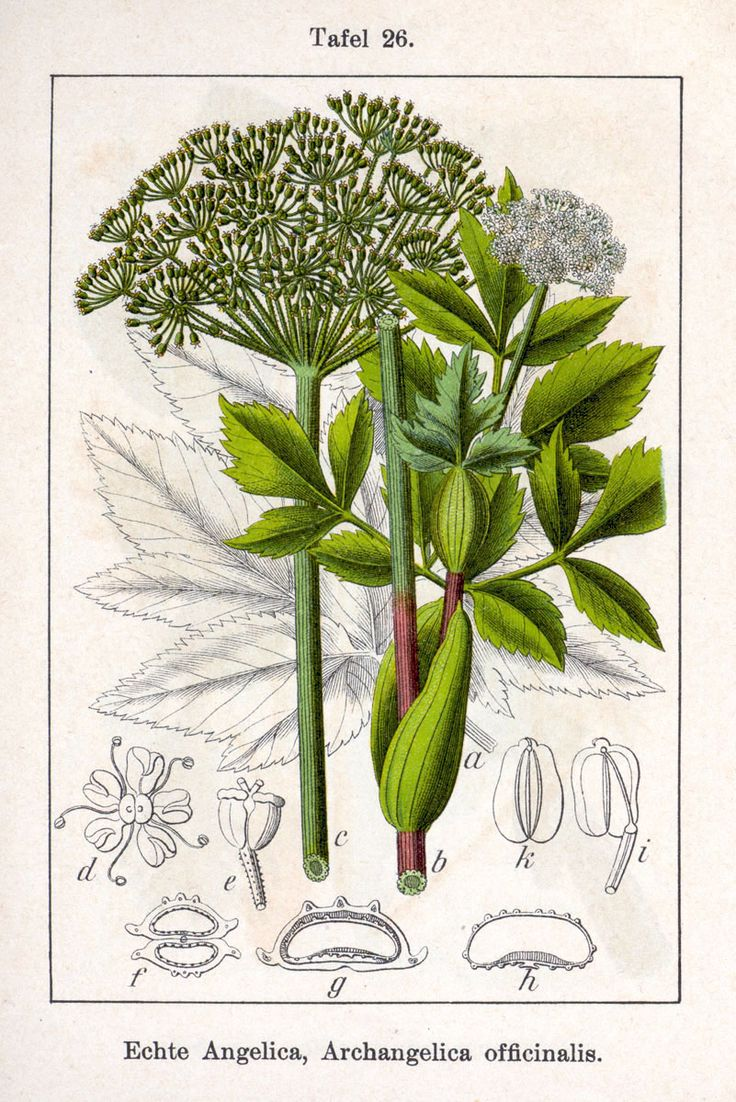 1000+ images about Botanical on Pinterest.