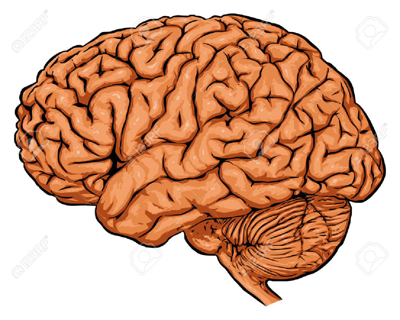 Neurologist Brain Clip Art.