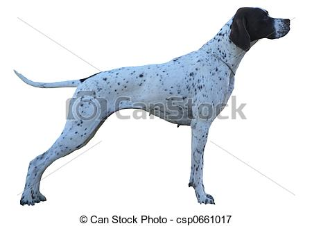 Picture of German Short Hair Pointer.