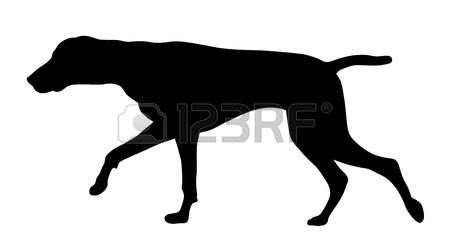 1,087 Pointer Dog Stock Vector Illustration And Royalty Free.
