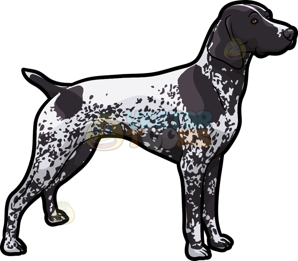 An Observant German Shorthaired Pointer Pet Dog Cartoon Clipart.