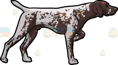 German Shorthaired Pointer Cartoon Clipart.