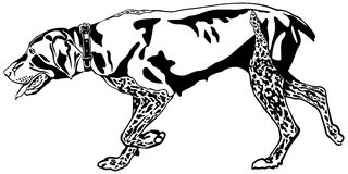 German Shorthaired Pointer On Point Clip Art.
