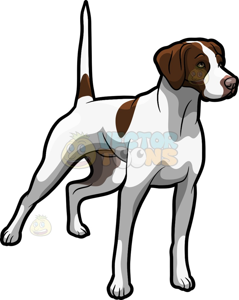 An Alerted German Shorthaired Pointer Pet Dog Cartoon Clipart.
