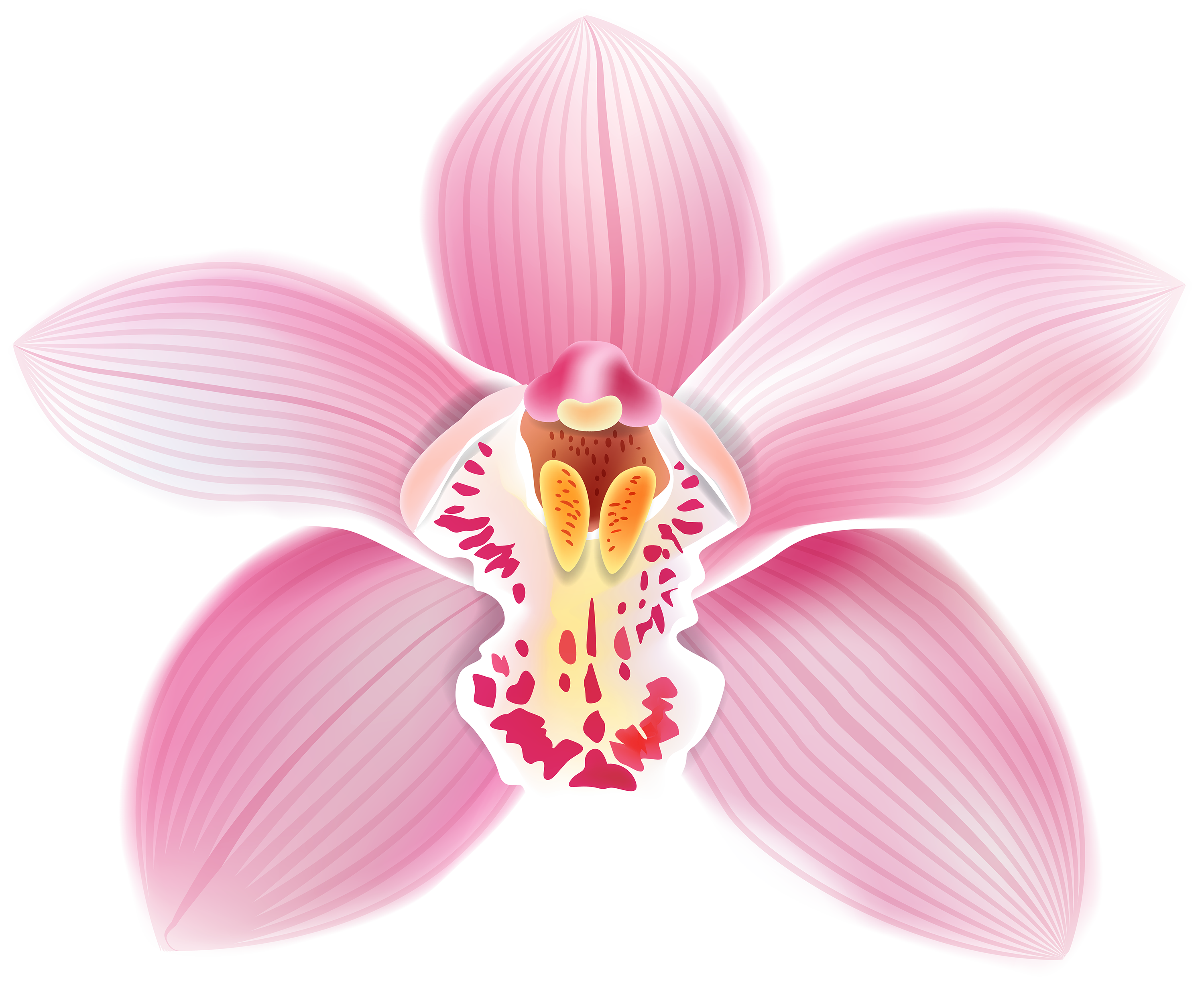 Pink Orchid PNG Clipart.