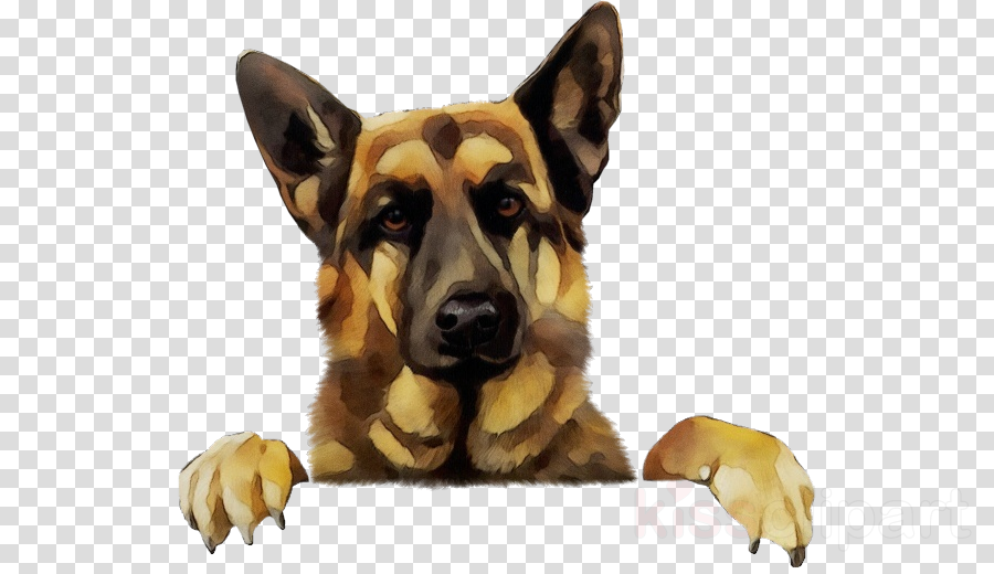 dog german shepherd dog snout police dog king shepherd.