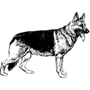 1325 German Shepherd free clipart.