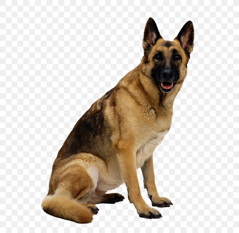 German Shepherd Clip Art, PNG, 298x420px, German Shepherd.