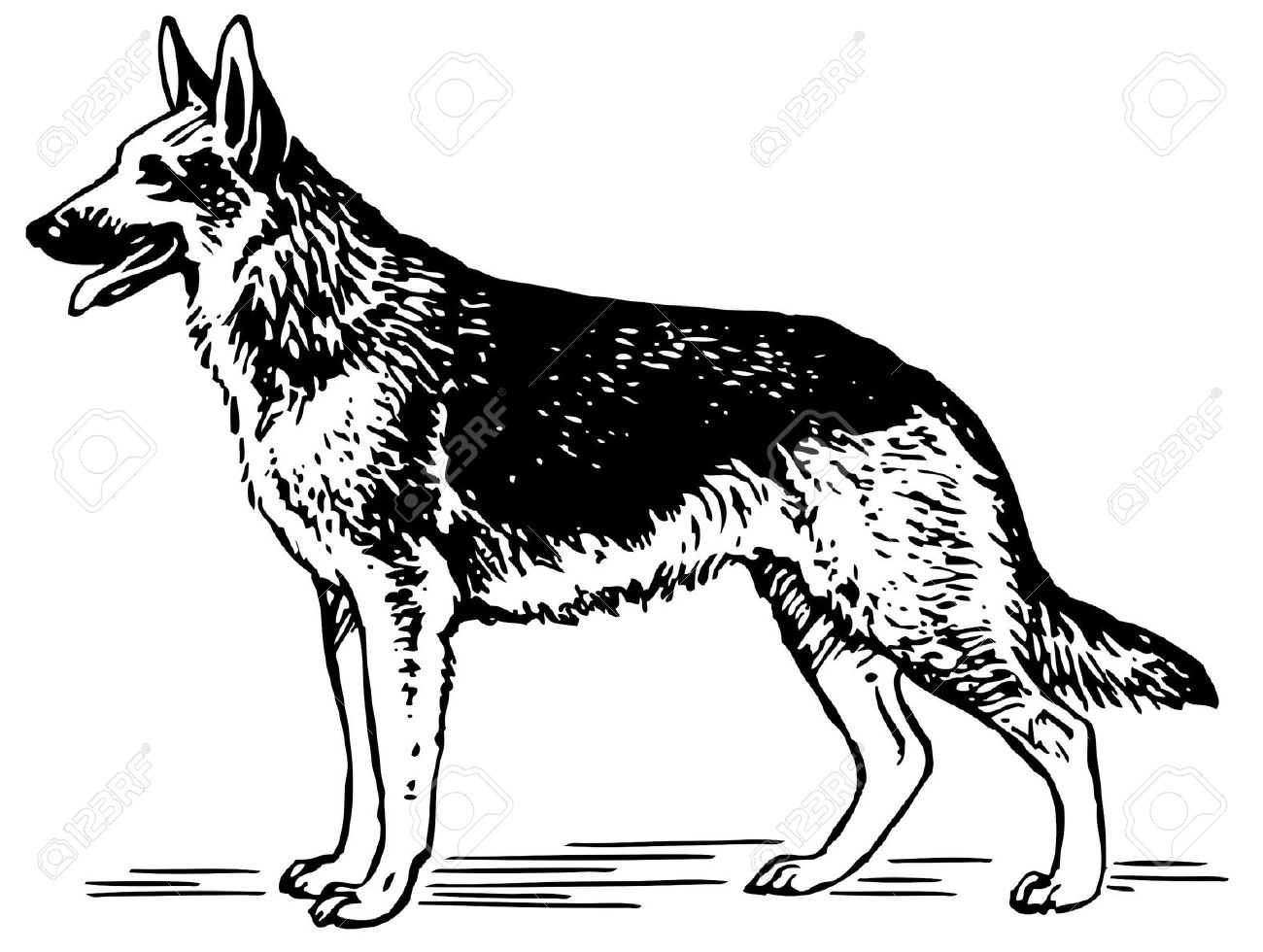 German Shepherd Dog Royalty Free Cliparts, Vectors, And Stock.
